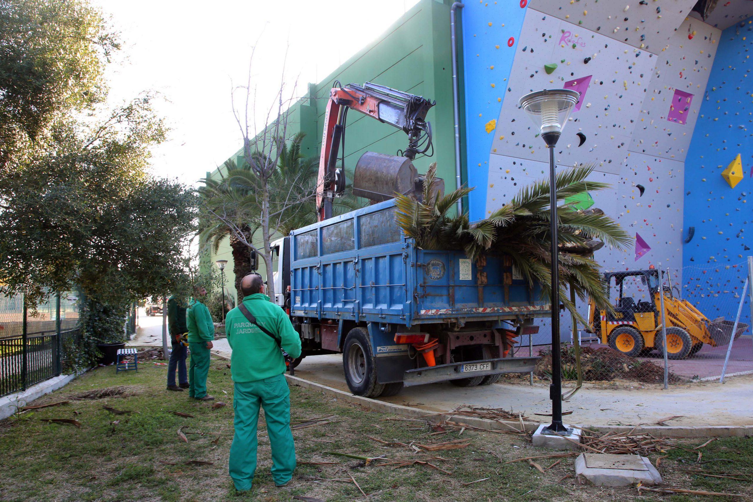 Acometen actuaciones de mejora en las zonas verdes del Polideportivo Paco Cantos