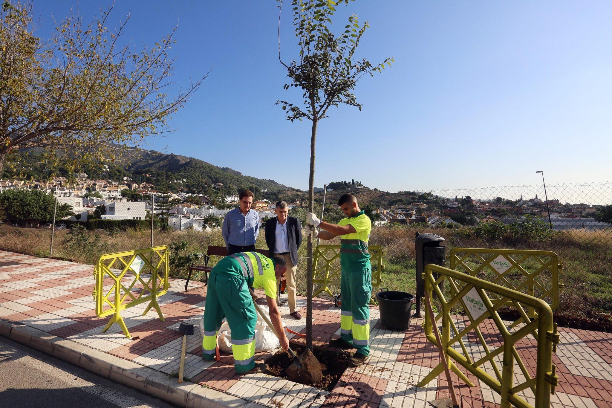El Ayuntamiento pone en marcha un plan integral de destoconado y plantaciones