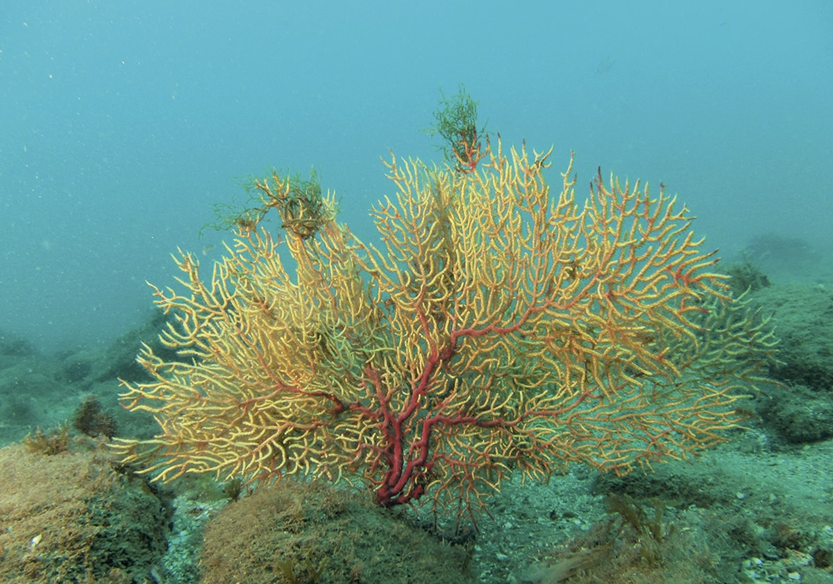 Los secretos de las profundidades marinas de Marbella