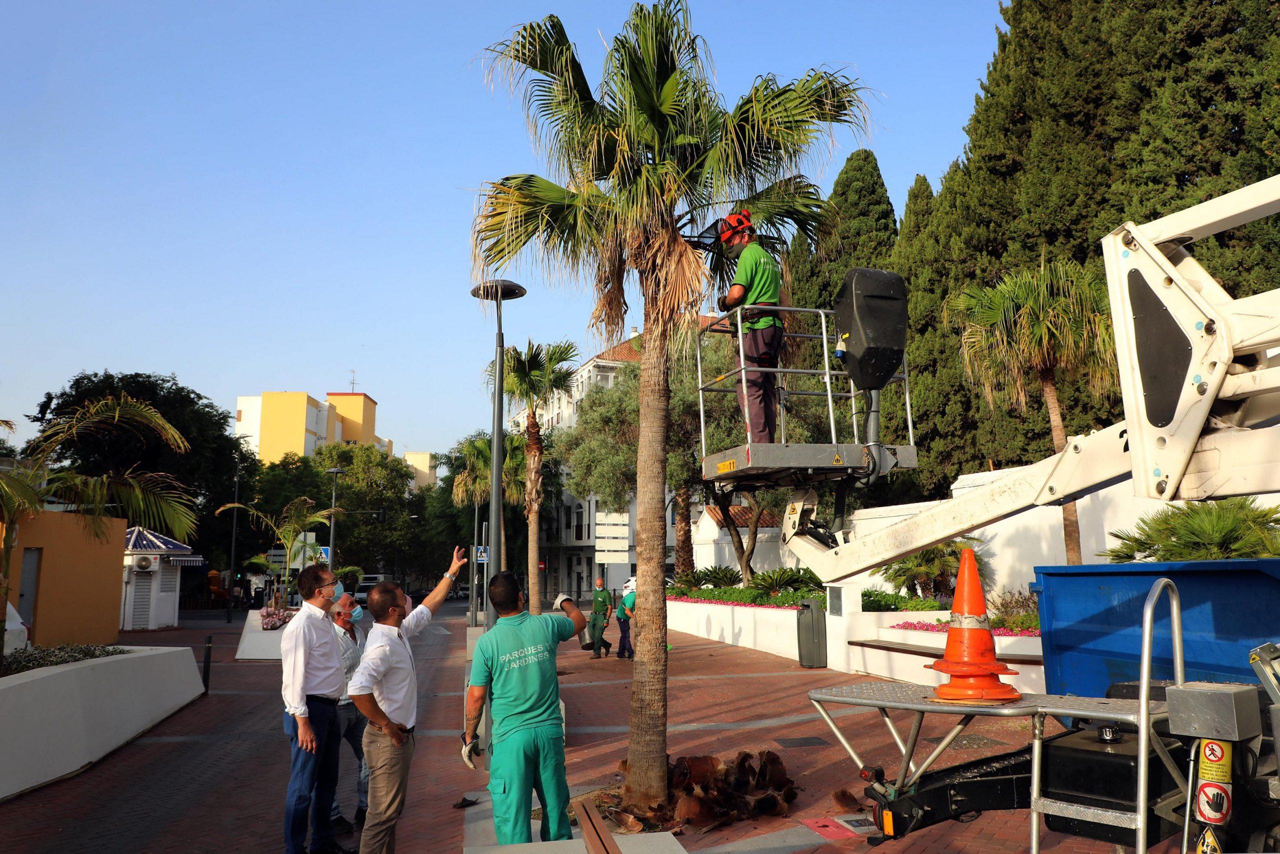 Parques y Jardines inicia la segunda fase del Plan de Poda